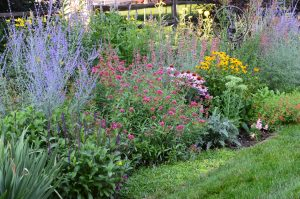 garden full of colorful perennial flowers